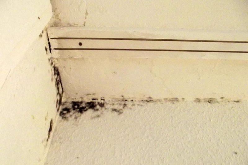 Moisissure sur le mur d une chambre